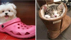 perritos-dentro-de-zapatos