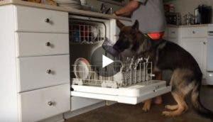 perro-ayuda-a-lavar-los-platos