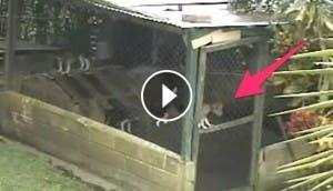 perro-escapa