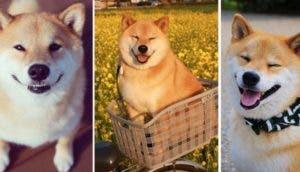 perro-feliz-maru