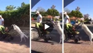 perro-paseando-bebe-coche