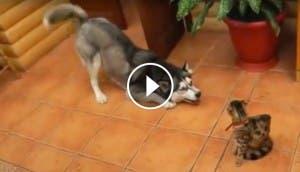 perro-quiere-amistad-gato-play