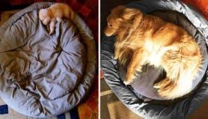 perros-antes-despues