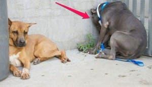 perros-sintomas-alerta