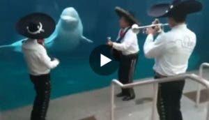 serenata-ballena-acuario