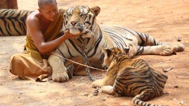 tigres9876