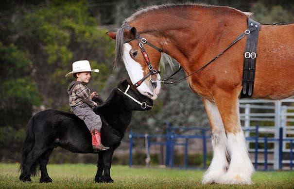 tiny-horses-24__605