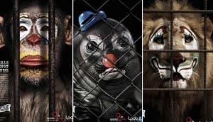 animales-maltratados