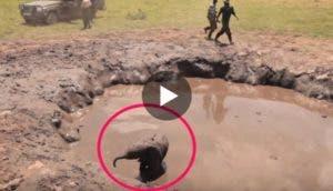 rescate-de-elefante