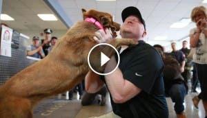 reunion-perro-sargento