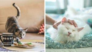 sesion-de-fotos-gatos
