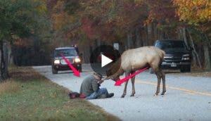 video-no-dar-de-comer-a-los-animales