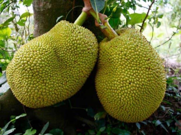 20-of-the-Worlds-Weirdest-Natural-Foods-Fruits-Vegetables3__700