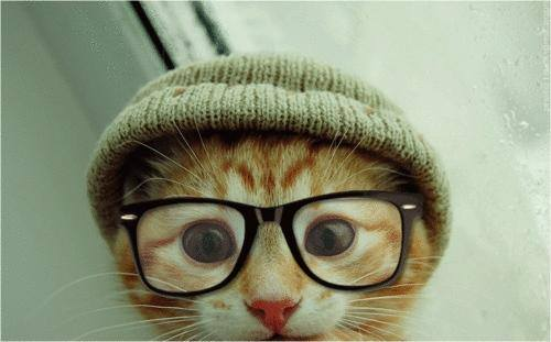 Gato-lentes