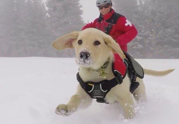 Perro-nieve
