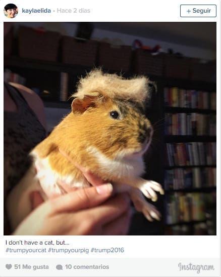 Trumpcat----