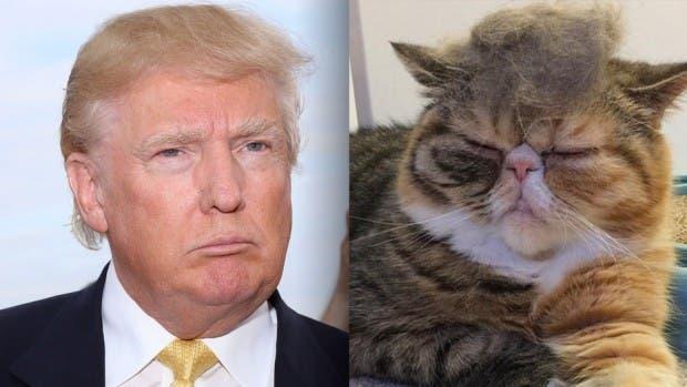 Trumpcat3