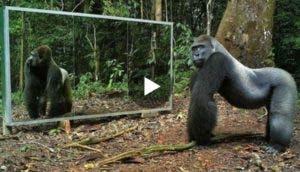 animales-salvajes-se-ven-por-primera-vez-en-el-espejo