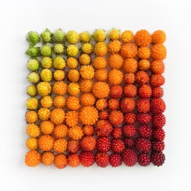 colorful-every-day-items-food-arrangements-emily-blincoe-46