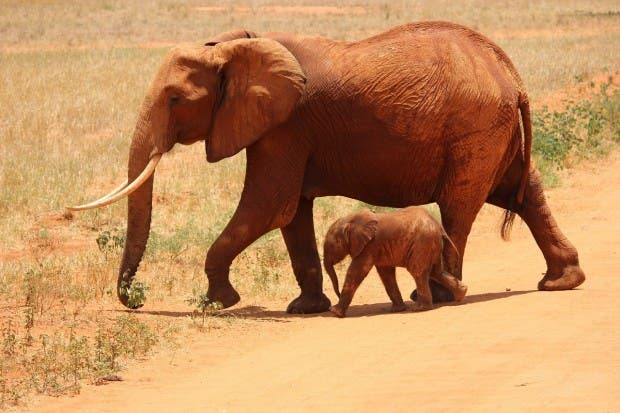 elephant-175798_1280