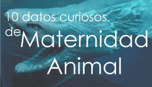 maternidad animal viralistas ok
