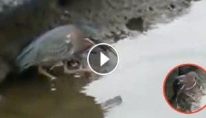 pajaro-comiendo