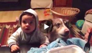 perro-dice-mama-play