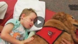 perro-nino-recuperacion