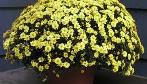 plantas-que-purifican-3