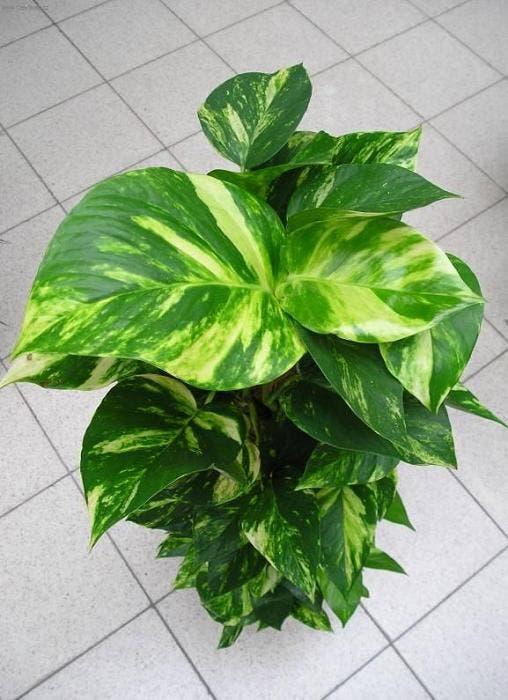 plantas-que-purifican-5