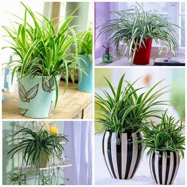 Plantas que limpam o ar de uma casa intonses for Plantas de interior limpian aire