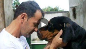 wilson-martins-perro-play