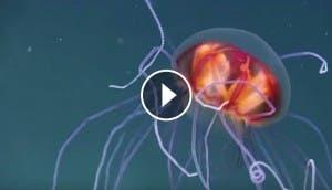 camara-al-fondo-del-mar