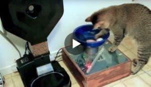 gato-maquina-bolas-play