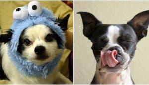nombres-de-los-perros-personalidad
