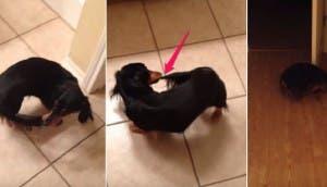 perrito alcanza su cola