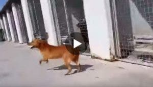 perro-adoptado-9-anos-play