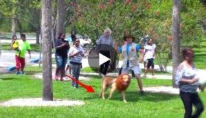 perro-leon-broma-play