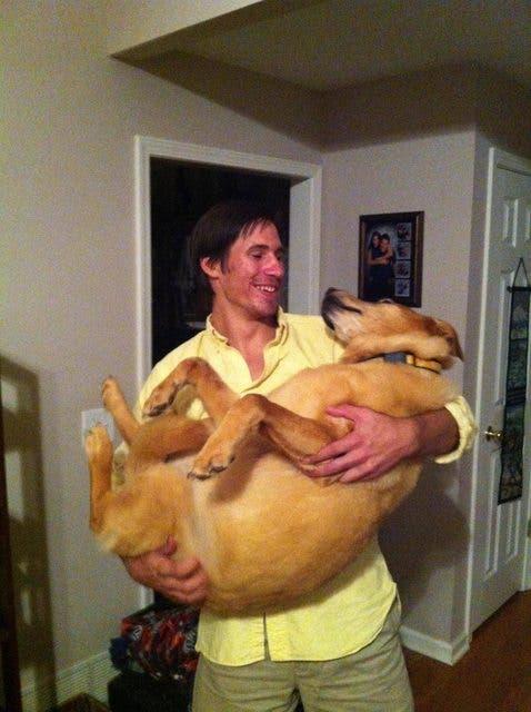 perros-grande-cree-cachorros-10