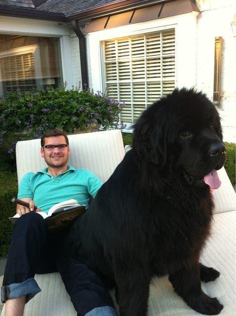 perros-grande-cree-cachorros-22
