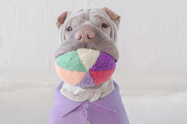 shar-pei-dog-paddington-friend-annie-cat-21