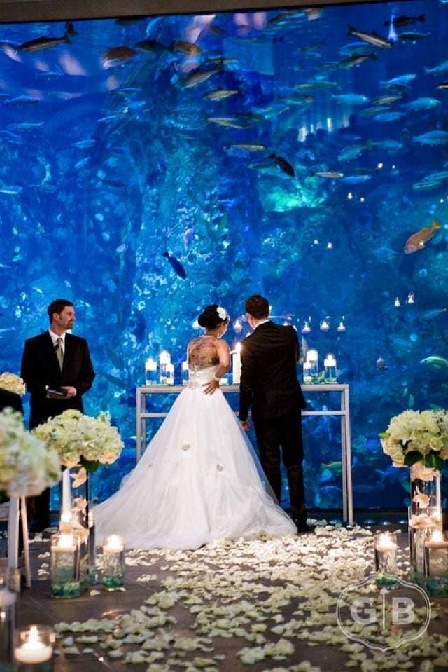boda-acuario1