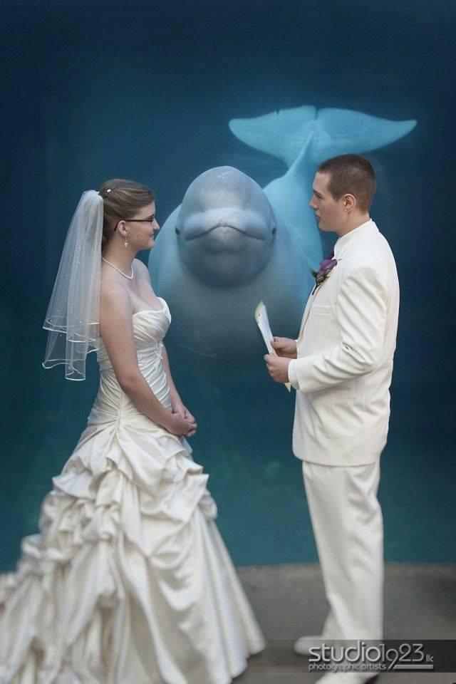 boda-acuario2