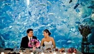 boda-acuario3 - copia