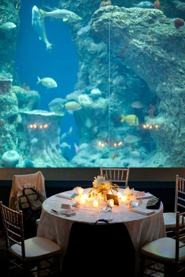 boda-acuario7