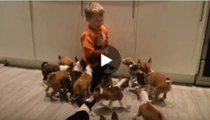 como-seria-tener-16-cachorros-en-casa
