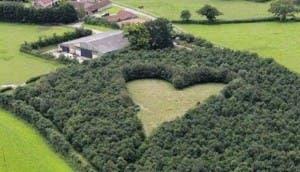 corazon gigante 5