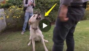 encantador-de-perros-sorpresa