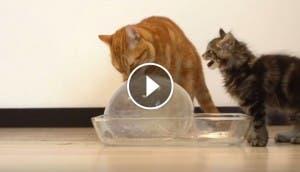gatitos-y-pelota-de-hielo