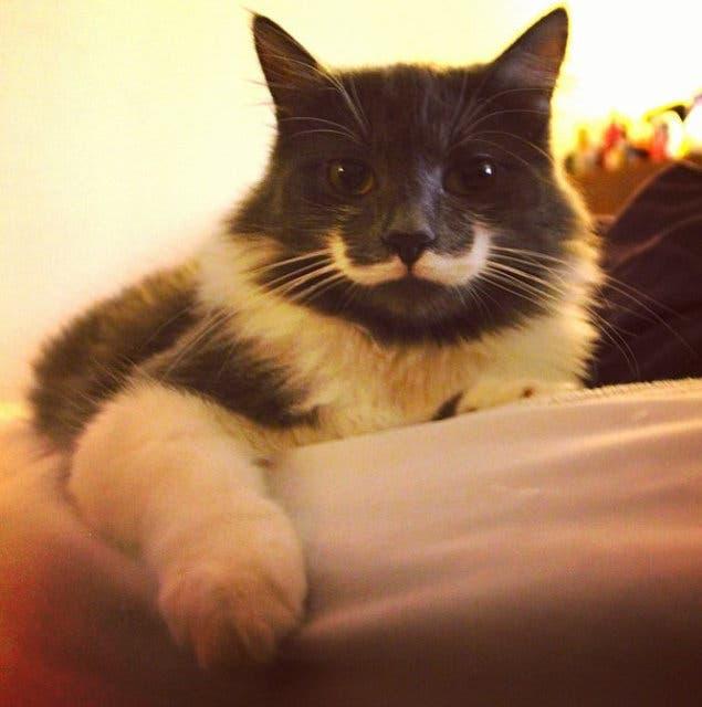 gatos con bigote 3